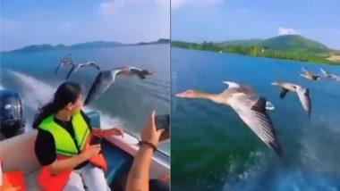 पानी में चलती बोट के पास दिखा पक्षियों का खूबसूरत नजारा, बार-बार देखा जा रहा है यह मनमोहक वीडियो (Watch Viral Video)