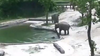 पानी में गिरा बेबी एलिफेंट, हाथी के परिवार ने ऐसे बचाई उसकी जान, Viral Video जीत लेगा आपका दिल