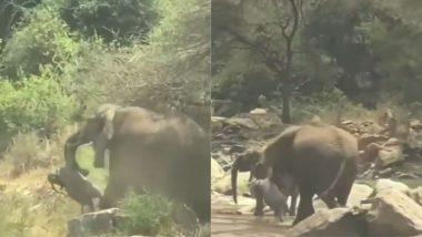 Elephant Viral Video: नन्हे हाथी के शव को लेकर यहां-वहां घूमती दिखी हथिनी, मां की बेबसी को देख भावुक हुए लोग