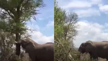 गजराज ने जब पेड़ को बनाया अपने गुस्से का शिकार, Viral Video में देखें हाथी की ताकत का अंजाम