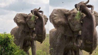 Viral Pic: बार-बार परेशान कर रही भैंस को गुस्साई हथिनी कुछ यूं उठाकर पटका, जिसे देख दांतों तले उंगली दबाने पर हो जाएंगे मजबूर