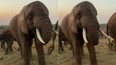 Viral Video: जंगल में एक जगह पर इकट्ठा होकर ब्रेकफास्ट करते हाथियों का वीडियो हुआ वायरल, देखकर बन जाएगा आपका दिन