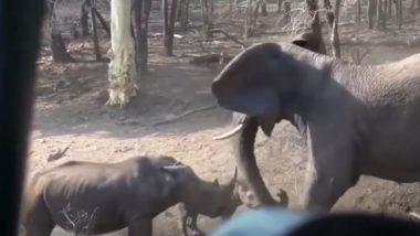 जब झील के पास जाते समय गैंडे ने रोका हाथियों का रास्ता, गुस्साए गजराज ने किया कुछ ऐसा… (Watch Viral Video)