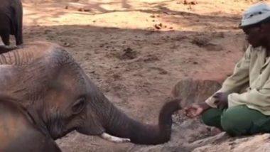 जंगल में छोड़े जाने के बाद अपने केयर टेकर से मिलने आया हाथी, दोनों के प्यार को देख गदगद हुए लोग (Watch Viral Video)