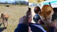 जंगल सफारी के दौरान वीडियो बनाते समय दौड़कर गाड़ी में घुस गई शेरनी, उसके बाद जो हुआ… (Watch Viral Video)
