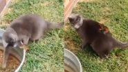 बिल्ली ने गिलहरी को किया परेशान, उसे सबक सिखाने के लिए नन्ही सी जीव ने किया कुछ ऐसा (Watch Viral Video)