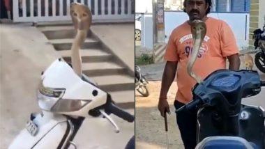 King Cobra Viral Video: स्कूटी के हैंडल से जब फन फैलाकर निकला किंग कोबरा, देखिए कैसे किया गया नागराज को रेस्क्यू
