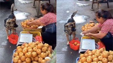 शॉपिंग बास्केट और पैसे लेकर मार्केट पहुंचा कुत्ता, फल-सब्जी खरीदते डॉगी को देख हैरान हुए लोग (Watch Viral Video)