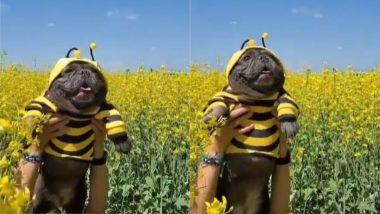 Viral Video: सोशल मीडिया पर छाया मधुमक्खी जैसा दिखने वाला यह डॉगी, बार-बार देखा जा रहा है यह वीडियो