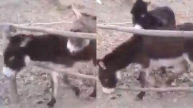 Donkey Viral Video: गधे ने बड़ी ही चालाकी से अपने साथियों को कराया आजाद, जानवर की समझदारी ने जीता सबका दिल