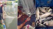 Kolkata Rains: कोलकता के न्यूटाउन में जलभराव वाली सड़क पर मिली 15 किलो कतला मछली (Watch Video)