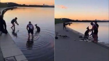 ठंडे पानी में फंसे कंगारू की मदद के लिए पहुंचे दो शख्स, झील से ऐसे किया जानवर को रेस्क्यू (Watch Viral Video)