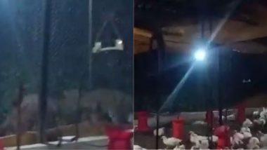 Viral Video: पुणे में एक पोल्ट्री फार्म के पास नजर आए दो तेंदुए, खौफजदा हुए लोग