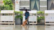 Viral Pic: बारिश में भीग रहा था कुत्ता, छतरी लेकर खड़े शख्स ने ऐसे की जानवर की मदद