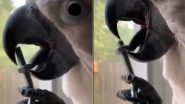 तोते ने अपनी जीभ से खोल दिया नट-बोल्ट, पक्षी के गजब के टैलेंट को देख हैरान हुए लोग (Watch Viral Video)