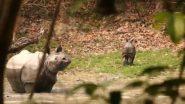 Viral Video: मां राइनो ने अपने बच्चे की शिकारी से की रक्षा, काजीरंगा नेशनल पार्क से वायरल हुआ वीडियो