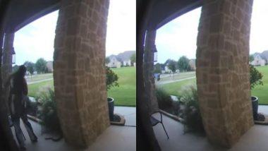 Viral Video: बरामदे में झाड़ियों के बीच छिपा बैठा था सांप, महिला के पास जाते ही फन फैलाकर आया सामने फिर…