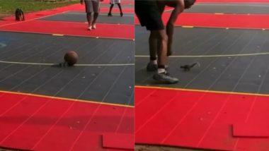 Viral Video: पुरुषों के बीच बॉस्केटबॉल खेलती दिखी नन्ही गिलहरी, सोशल मीडिया पर वायरल हुआ मनमोहक वीडियो