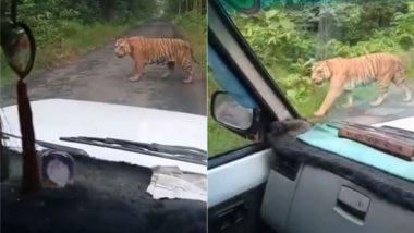 जंगल में मौजूद लोगों को नजरअंदाज कर जब टाइगर अपनी धुन में करता रहा सैर, सोशल मीडिया पर Video हुआ Viral