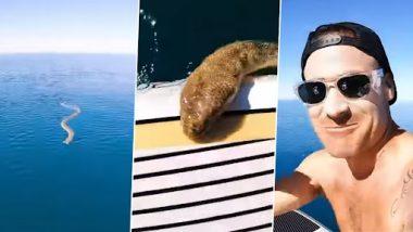 Sea Snake Video: समुद्र में सर्फिंग के दौरान पेडल बोर्ड पर चढ़ा सांप, उसके बाद जो हुआ देखें वीडियो