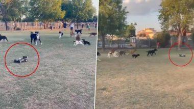 Viral Video: रिमोट कंट्रोल कार के पीछे भागता नज़र आया कुत्तों का झुंड, वीडियो हुआ वायरल
