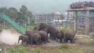 Viral Video: पलक्कड़ IIT कैंपस में घुसा हाथियों का झुंड, वीडियो देख लोगों ने कहा हर कोई आईआईटी जॉइन करना चाहता है