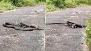 King Cobra And Monitor Lizard Fighting: किंग कोबरा ने मॉनिटर लिज़र्ड की काटी पूंछ, छिपकली ने कर दिया हमला, वीडियो हुआ वायरल