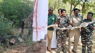 Zoho के सीईओ की 12 फुट लंबे दुर्लभ किंग कोबरा से हुई मुलाक़ात, तस्वीरें हुईं वायरल