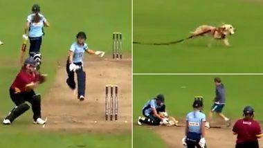 Dog Viral Video: क्रिकेट मैच के दौरान फिल्ड में घुसा कुत्ता और बॉल लेकर भागा, देखें दिल खुश कर देने वाला वीडियो