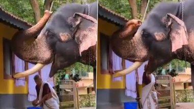 Elephant Video: एक हाथी को खाना खिलाते हुए बूढ़ी अम्मा का वीडियो वायरल, वीडियो देख हो जाएंगे इमोशनल