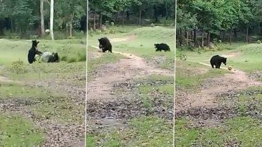 Viral Video: ओडिशा के नबरंगपुर में दो जंगली भालू दौड़ते और फुटबॉल खेलते हुए कैमरे में कैद, क्यूट वीडियो हुआ वायरल