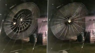 Spider Weaving Web: मकड़ी का जाला बुनते हुए क्लिप हुआ वायरल, पहले कभी नहीं देखा होगा आपने ऐसा वीडियो