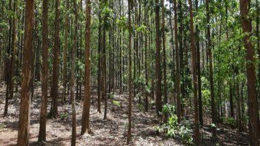 Chhattisgarh: जंगलों को बचाने के लिए आदिवासी ग्रामीणों ने की 300 किलोमीटर की पदयात्रा