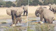 नन्हे हाथी की जान बचाने के लिए मगरमच्छ से भिड़ी हथिनी, Viral Video में देखें इस खूनी जंग का क्या हुआ अंजाम