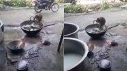होटल के बाहर इंसानों की तरह जब बर्तन धोने लगा बंदर, Viral Video देख चकरा जाएगा आपका सिर