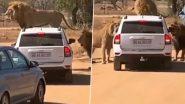 जब तीन शेरों ने किया एक कार पर कब्जा, वाहन के भीतर बैठे यात्रियों की हलख में अटकी जान (Watch Viral Video)