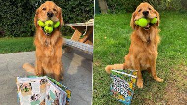 Viral: गोल्डन रिट्रीवर ने अपने मुंह में एक साथ 6 टेनिस बॉल्स पकड़कर बनाया गिनीज वर्ल्ड रिकॉर्ड, देखें तस्वीरें