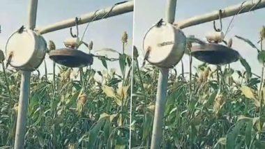 Viral Video: फसलों से पक्षियों को भगाने के लिए किसान ने किया जबरदस्त देसी जुगाड़, इंटरनेट पर लोग हुए इम्प्रेस, देखें वीडियो