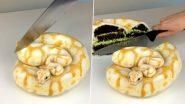 Snake Cake: सोशल मीडिया पर स्नेक केक का क्लिप वायरल, असली और नकली सांप में नहीं कर पाएंगे फर्क