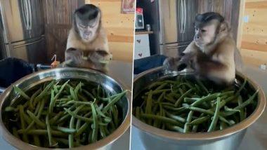 Monkey Funny Video: हाथों से Green Beans तोड़ते समय खिसियाते और मुंह बनाते बंदर का मजेदार क्लिप वायरल, देखें वीडियो