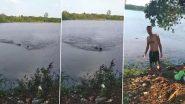 Viral Video: विशाल मगरमच्छ ने तैराक पर किया हमला, कांटी बांह, वीडियो देख डरे लोग